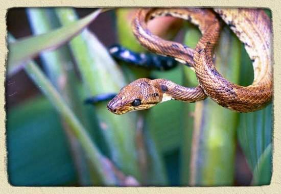 amazon-rainforest-snakes