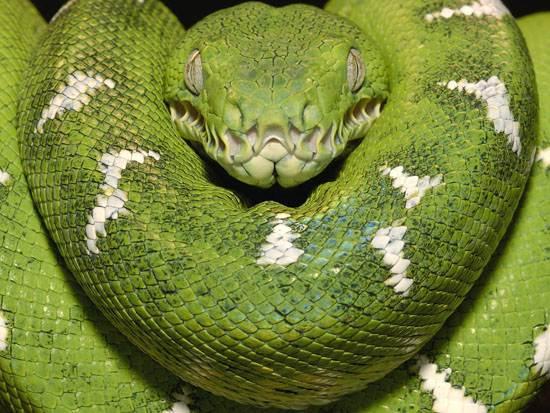 amazon-the-worlds-largest-rainforests-1
