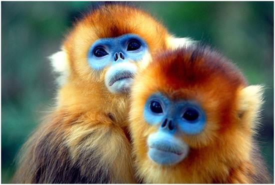 amazon-the-worlds-largest-rainforests-4