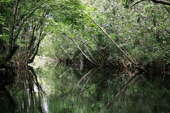 amazon-the-worlds-largest-rainforests-7