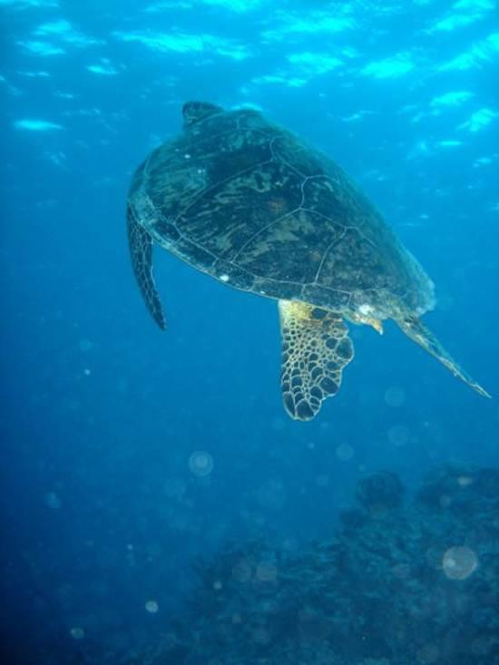 australia-great-reef-barrier-3