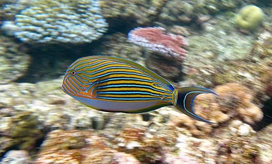 australia-great-reef-barrier-4