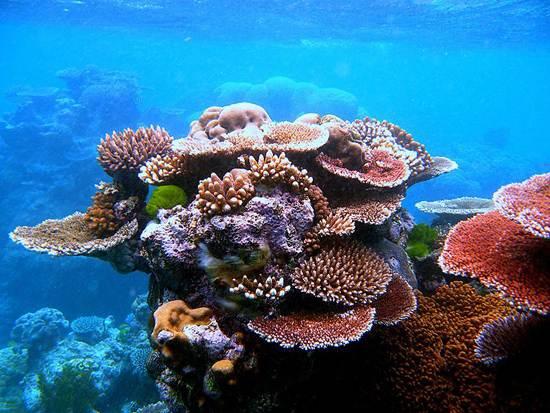 australia-great-reef-barrier-5