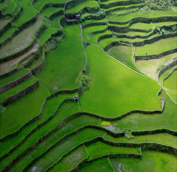Banaue Rice Terraces, in Ifugao Stairway to Heaven Philippines   _09