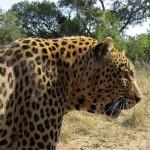 Traveling to Kruger National Park South Africa