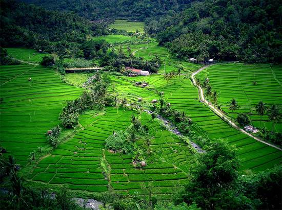 balis-rice-terraces1