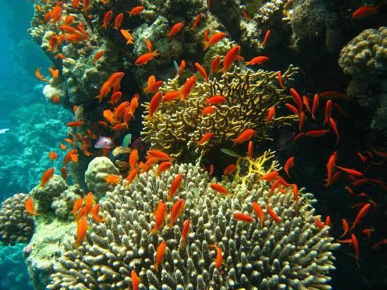 australia-great-barrier-reef-national-treasure-3