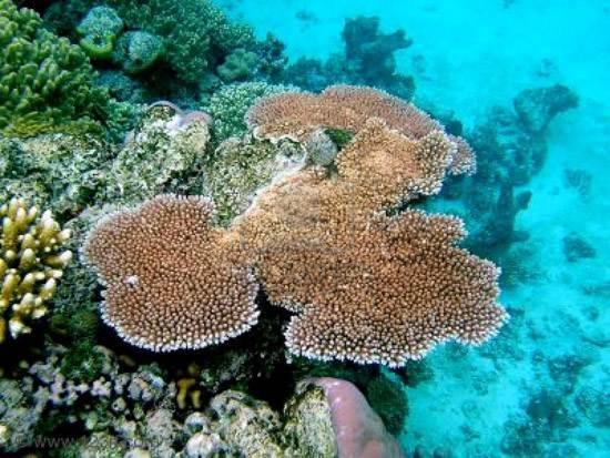 australia-great-barrier-reef-national-treasure-6