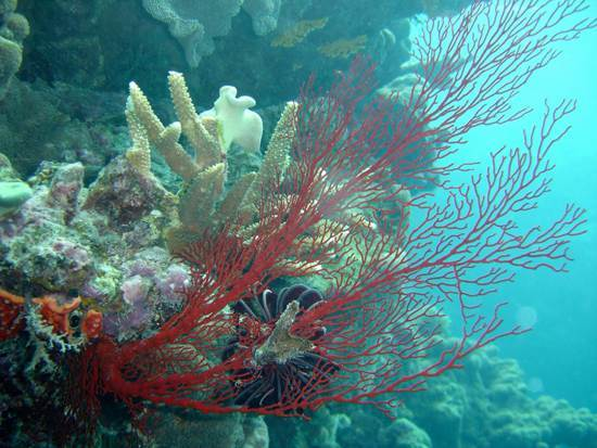 australia-great-barrier-reef-national-treasure-9