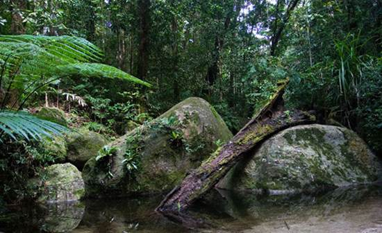 daintree-the-oldest-continuously-living-rain-forest-14