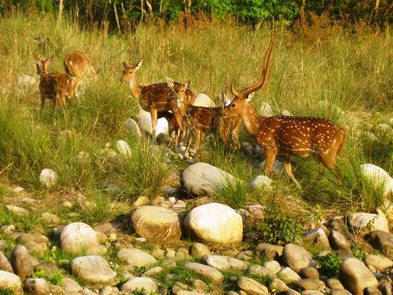 india-corbett-national-park-tiger-reserve-13
