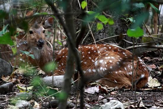 india-corbett-national-park-tiger-reserve-14