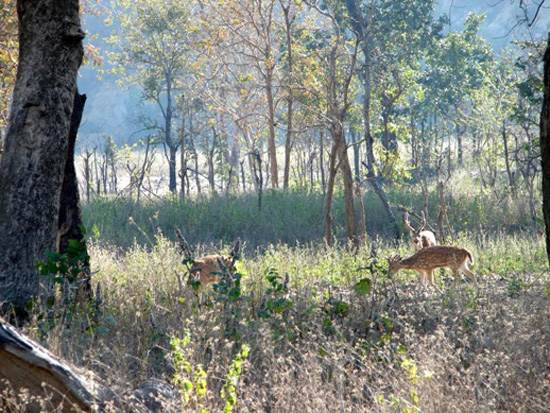 india-corbett-national-park-tiger-reserve-2