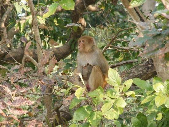 india-corbett-national-park-tiger-reserve-7