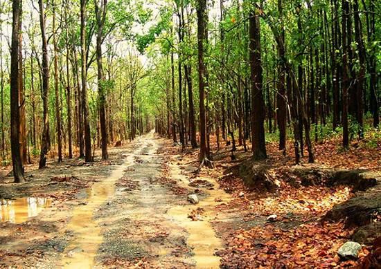 india-corbett-national-park-tiger-reserve-8
