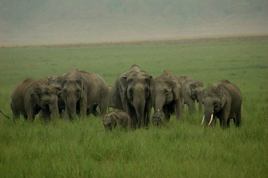 india-corbett-national-park-tiger-reserve-9