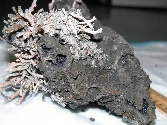 ocean-floor-deep-sea-vents-21
