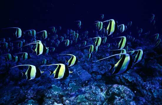 palau-the-black-islands-10
