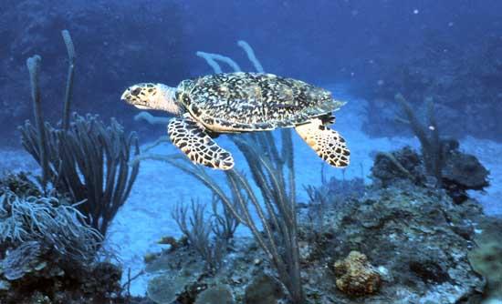 palau-the-black-islands-15