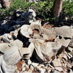 Traveling to USA   Nevada   Prometheus  Oldest Tree in the World
