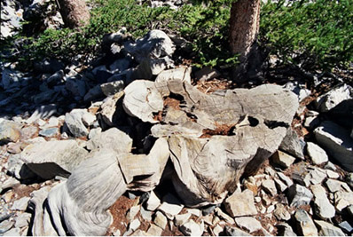 prometheus-tree-stump - Copy