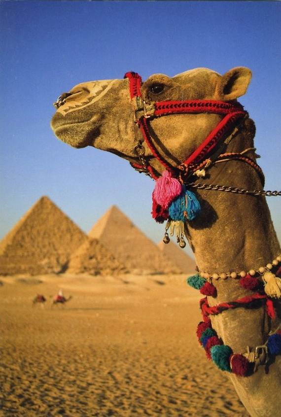 Christmas Holidays In Egypt Family Holiday Net Guide To