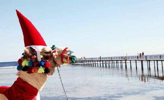 Christmas-Holidays-in-Egypt_17