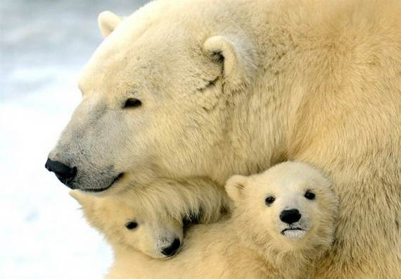 Mother-Day-The-Beauty-Of-Motherhood-In-The-Animal-Kingdom-_101