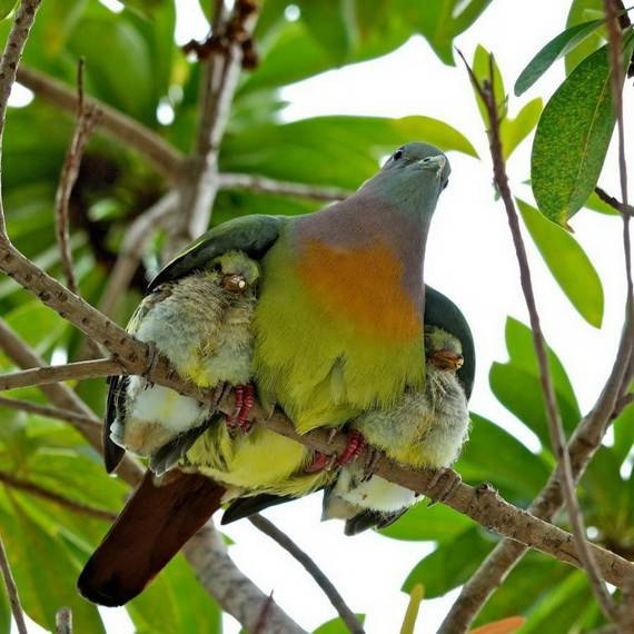 Mother-Day-The-Beauty-Of-Motherhood-In-The-Animal-Kingdom-_211