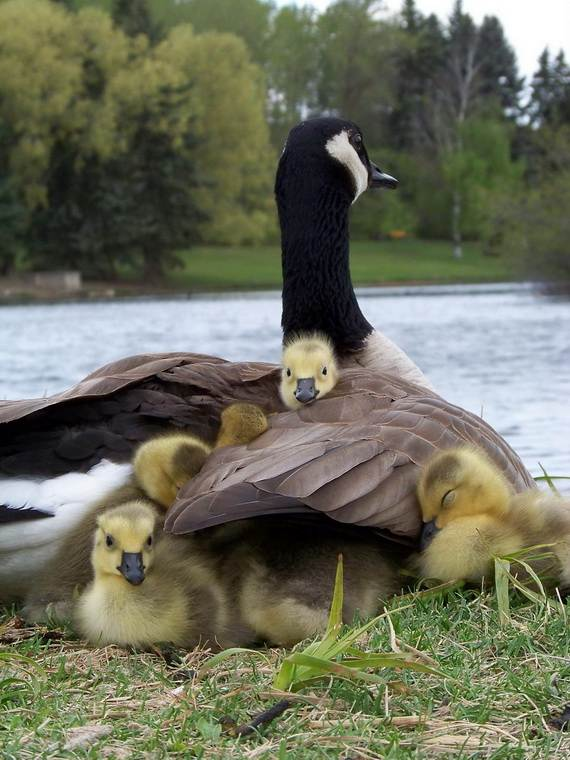 Mother-Day-The-Beauty-Of-Motherhood-In-The-Animal-Kingdom-_321