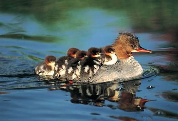 Mother-Day-The-Beauty-Of-Motherhood-In-The-Animal-Kingdom-_501
