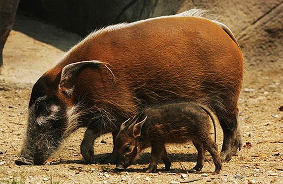 Mother-Day-The-Beauty-Of-Motherhood-In-The-Animal-Kingdom-_571