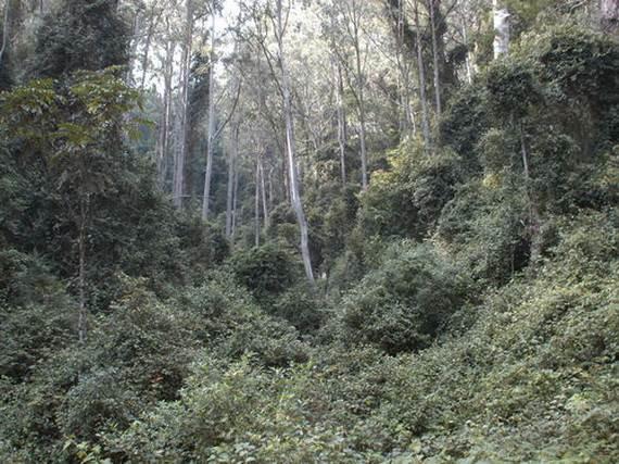 dja-faunal-reserve-cameroon_07