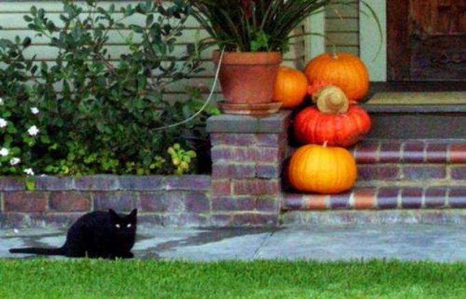 Cool-Outdoor-Halloween-Decorations-2012-Ideas_321