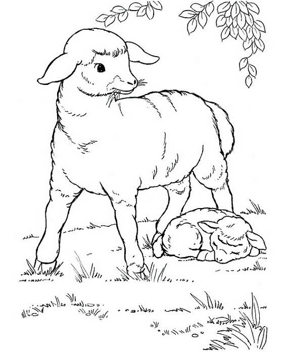 Eid Al Adha Islam Coloring Pages Family Holiday Net
