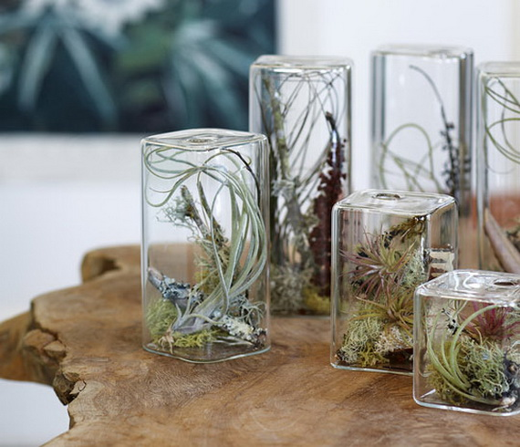Unusual air plants home decoration inspiration ideas and for House decoration things