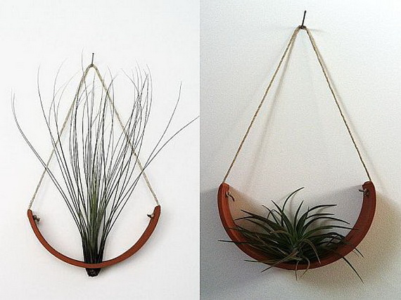 Unusual Air Plants Home Decoration Inspiration Ideas And Gifts