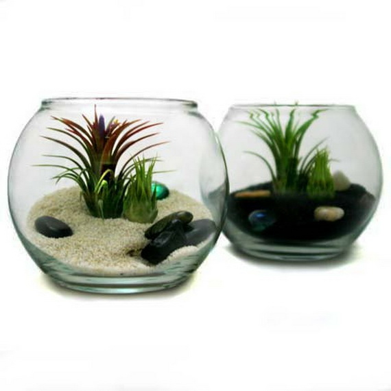 unusual air plants - home decoration inspiration ideas and gifts