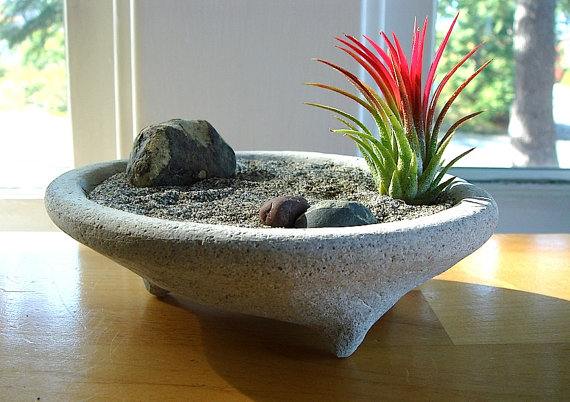 Unusual air plants home decoration inspiration ideas and gifts family to - Interesting house plants ...