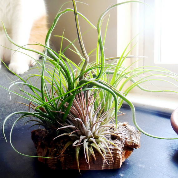 50 Creative Ideas To Display Your Air Plants In A Most: Home Decoration Inspiration Ideas And