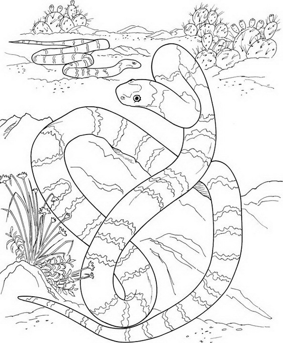 Chinese New Year Snake Coloring Pages02: Water Snake Coloring Sheet At Alzheimers-prions.com