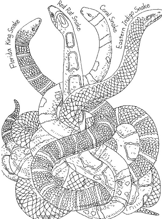 Chinese New Year Snake Coloring Pages - family holiday.net ...