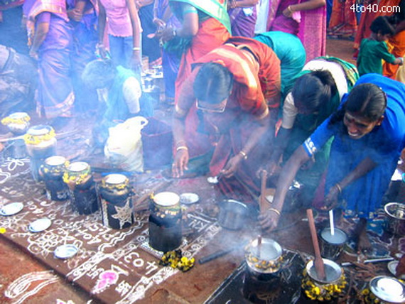 Pongal – Celebrating the Indian Harvest Festival_20