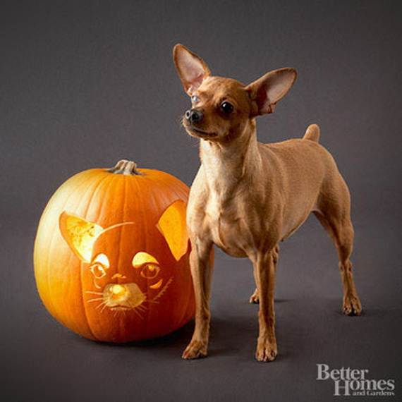 Cool-Easy-Pumpkin-Carving-Ideas-_11