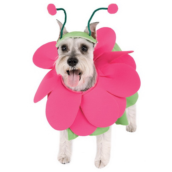 Unique and Beautiful Halloween Costumes Ideas for Pets_06