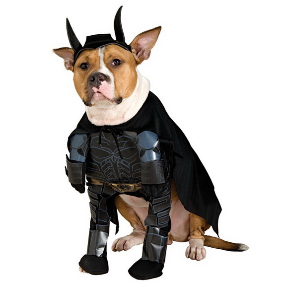 Unique and Beautiful Halloween Costumes Ideas for Pets_09