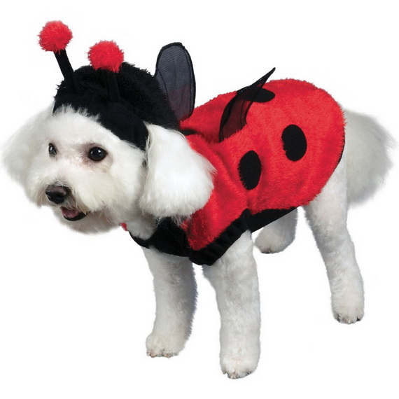 Unique and Beautiful Halloween Costumes Ideas for Pets_34