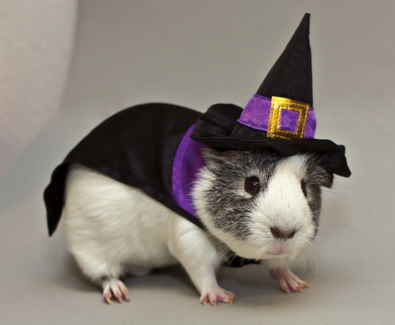 Unique and Beautiful Halloween Costumes Ideas for Pets_39