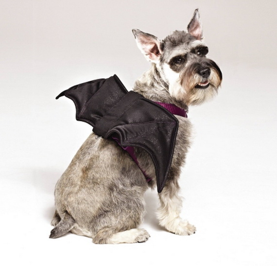 Unique and Beautiful Halloween Costumes Ideas for Pets_42