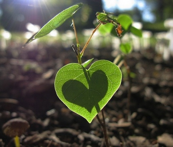 Green Valentine's Day Gift Ideas 2014- Eco-Friendly Presents _41